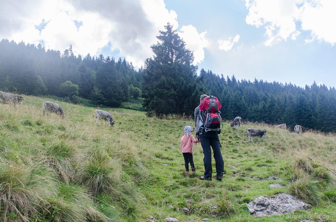 Unser Weg führte mitten über die Kuhwiese.