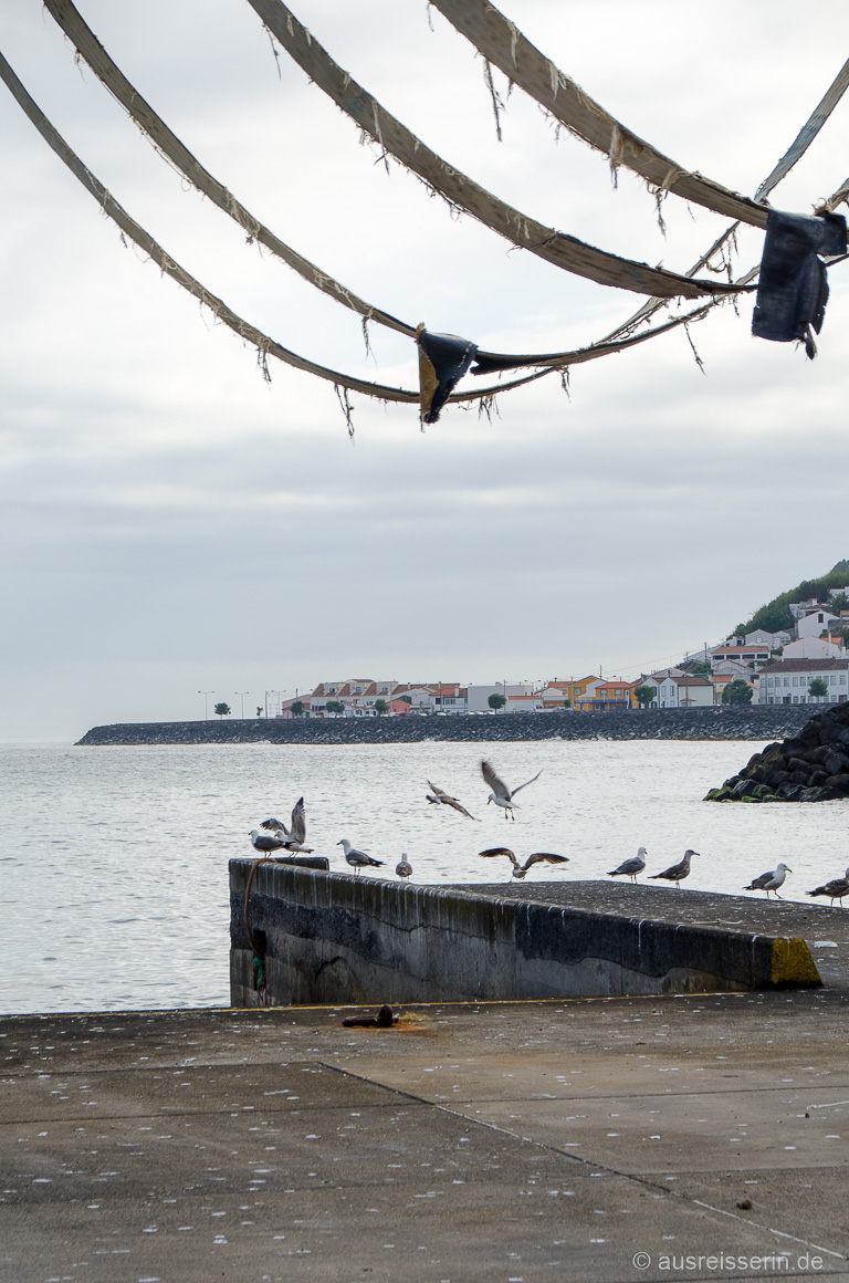 Möwen im Hafen von Ribeira Quente