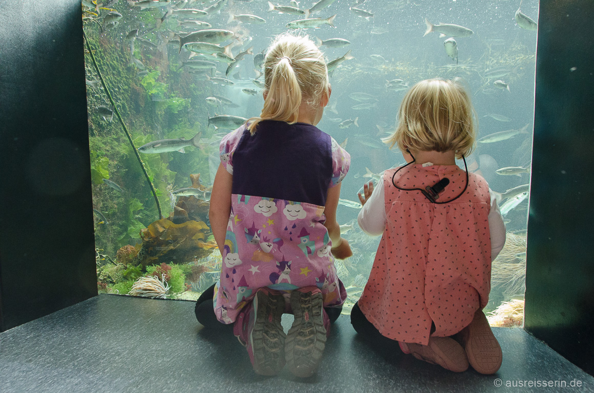 Das Océanopolis ist auch für Kinder spannend.