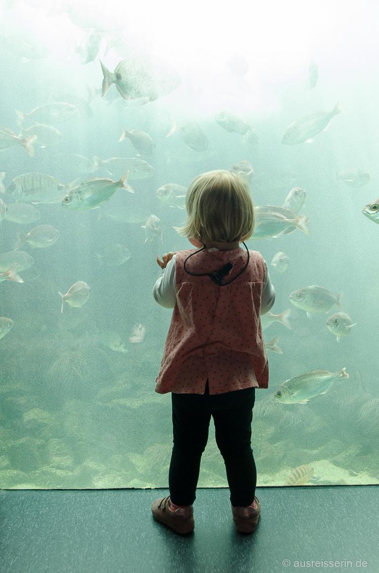 Zum Greifen nah: Fische im Océanopolis