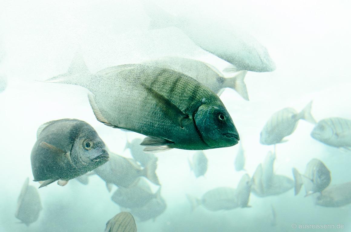 Fische im Océanopolis