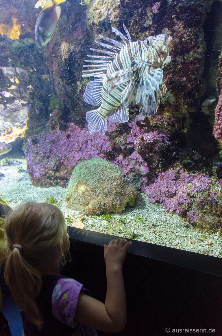 Tropischer Fisch im Océanopolis
