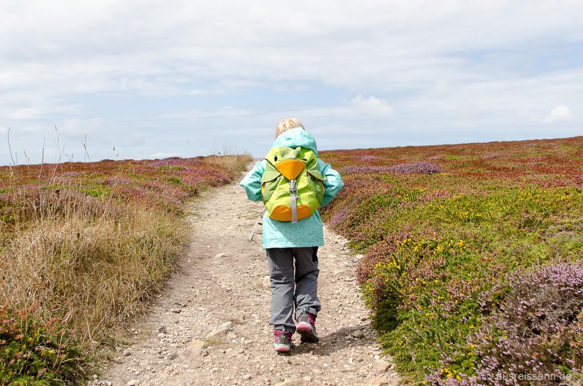 Wandern durch leuchtend rote Heide - toll!