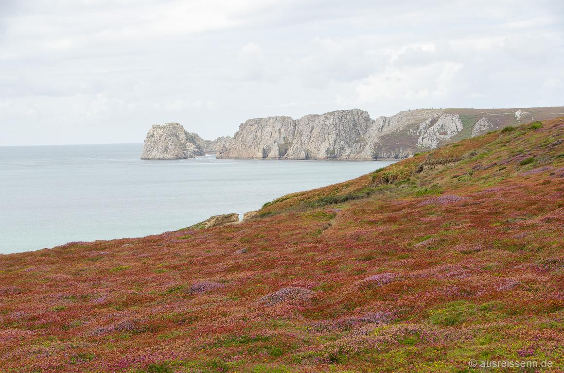 Kontraste auf der Crozon-Halbinsel: Heide und Pointe de Pen Hir