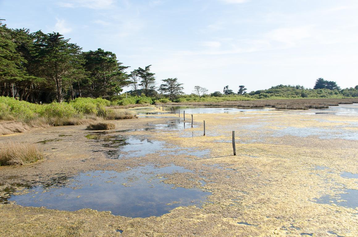 Tümpel kurz vor der Küste