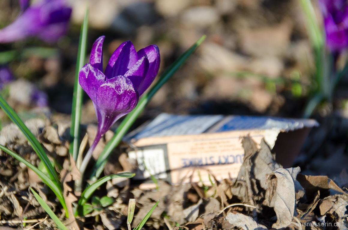 Zigarettenschachtel in der Natur
