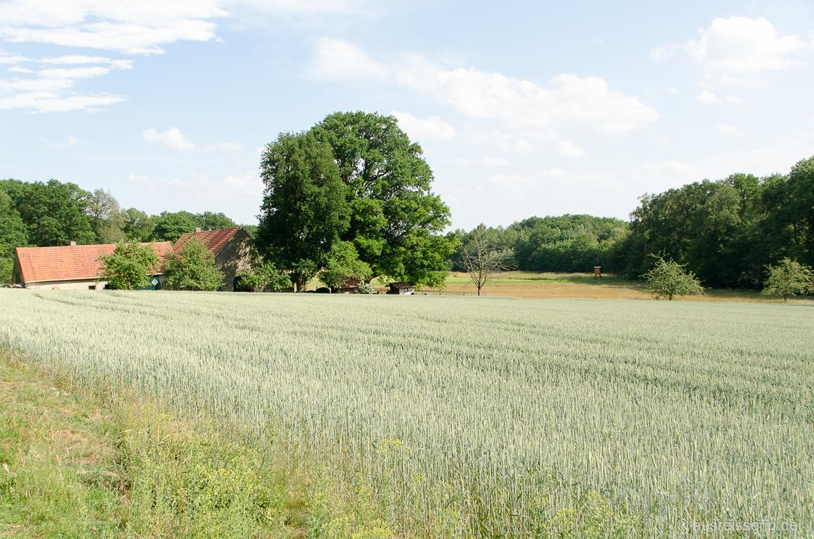 Felder am Fuße der Dörenther Klippen